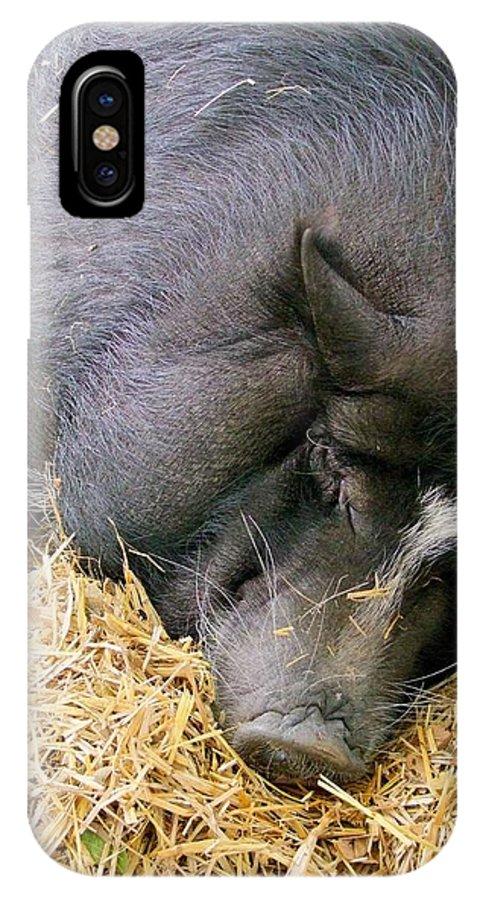 Pig IPhone X Case featuring the photograph Sleeping Sow by Mary Deal