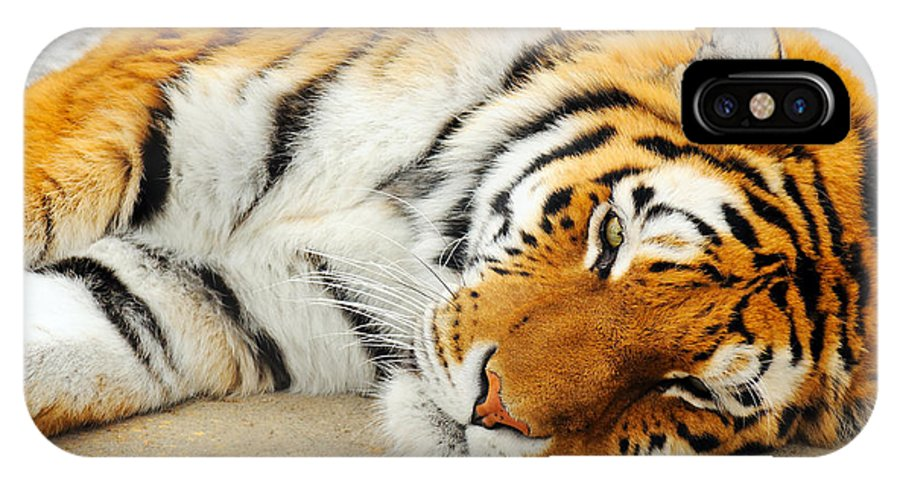 Animal IPhone X Case featuring the photograph Sleeping Tiger by Sylvie Bouchard
