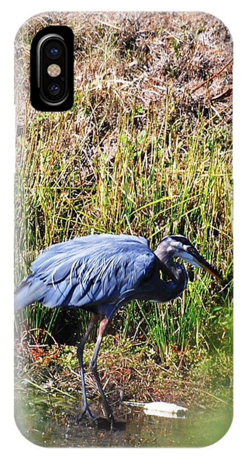 Blue Heron IPhone X Case featuring the photograph Slipping Away by Mary Griffin