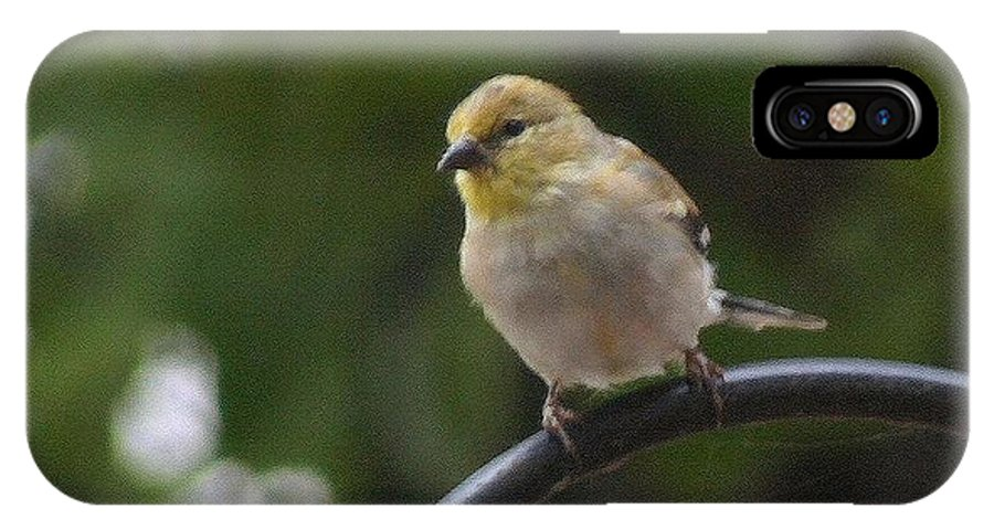 Small IPhone X Case featuring the photograph Gold Finch Resting by Ronald Gater
