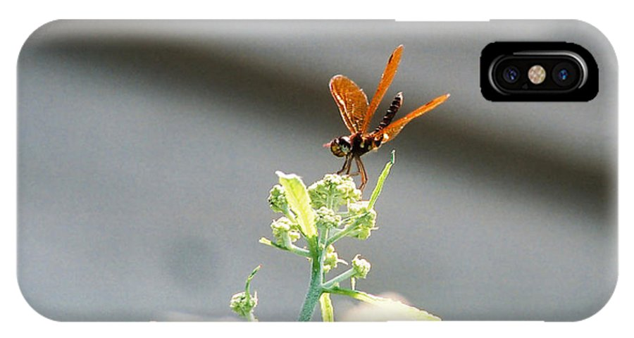 Dragonfly IPhone X Case featuring the photograph Smiling Dragonfly 1 by Cynthia Syracuse