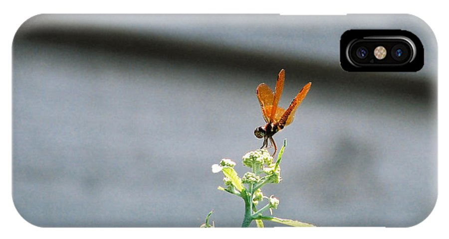 Dragonfly IPhone X Case featuring the photograph Smiling Dragonfly 2 Meerrp by Cynthia Syracuse