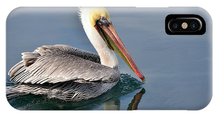 California Brown Pelican IPhone X Case featuring the photograph Smooth Sailing by Fraida Gutovich