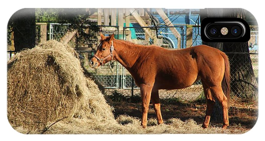 Hay IPhone X Case featuring the photograph Snacking On Some Hay by Michelle Powell