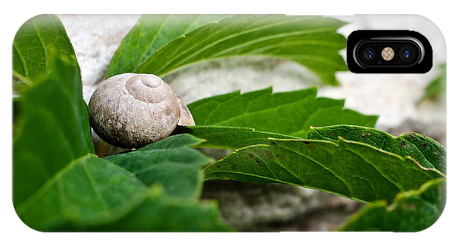 Animal IPhone X Case featuring the photograph Snail Shell by Chase Taylor