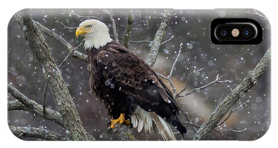 Bald Eagle IPhone X Case featuring the photograph Snow Again by Nathan Harker
