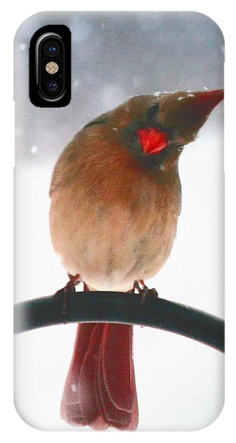 Female Northern Cardinal IPhone X Case featuring the photograph Snow Bird by Diane Merkle