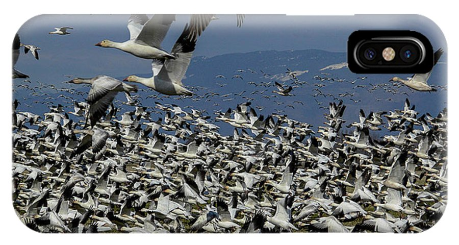 Snow Geese IPhone X Case featuring the photograph Snow Geese At Skagit by Judy Cheley