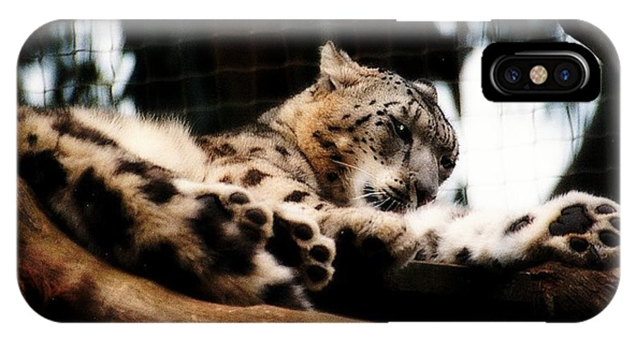 Wildcat IPhone X Case featuring the photograph Snow Leopard by Elaine Burlew
