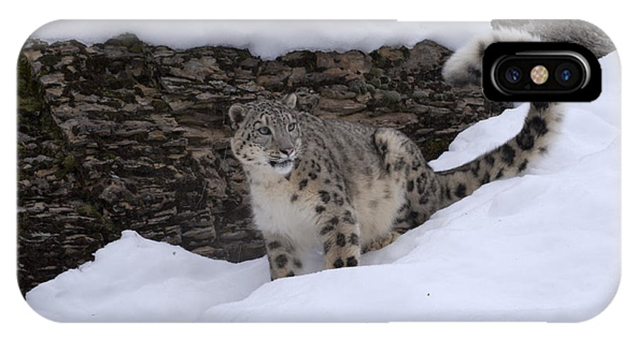 Snow Leopard IPhone X Case featuring the photograph Snow Leopard by Sandra Bronstein