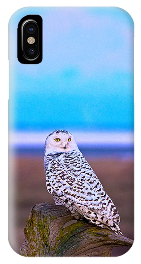 Owl IPhone X Case featuring the photograph Snow Owl At Sunset by Rob Mclean