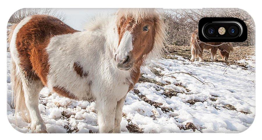 Landscape IPhone X Case featuring the photograph Snow Ponies - Colour by Christine Smart