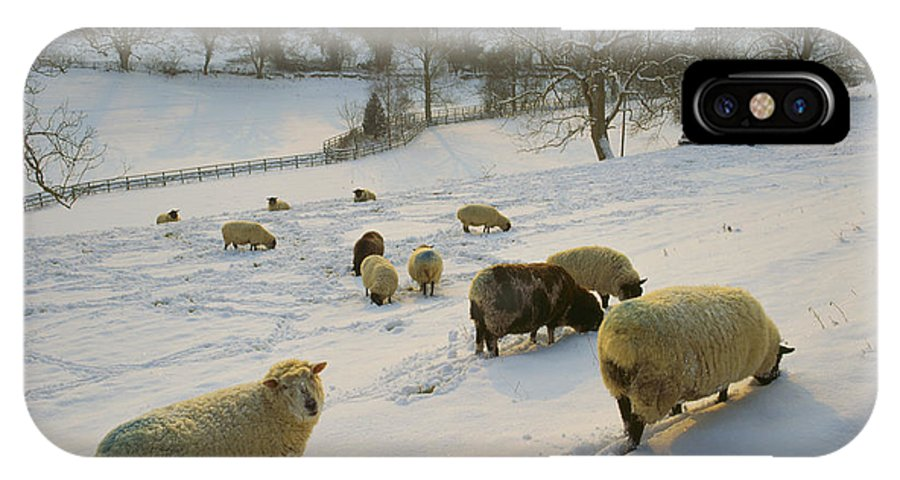 Snow IPhone X Case featuring the photograph Snow Sheep by Paul Felix