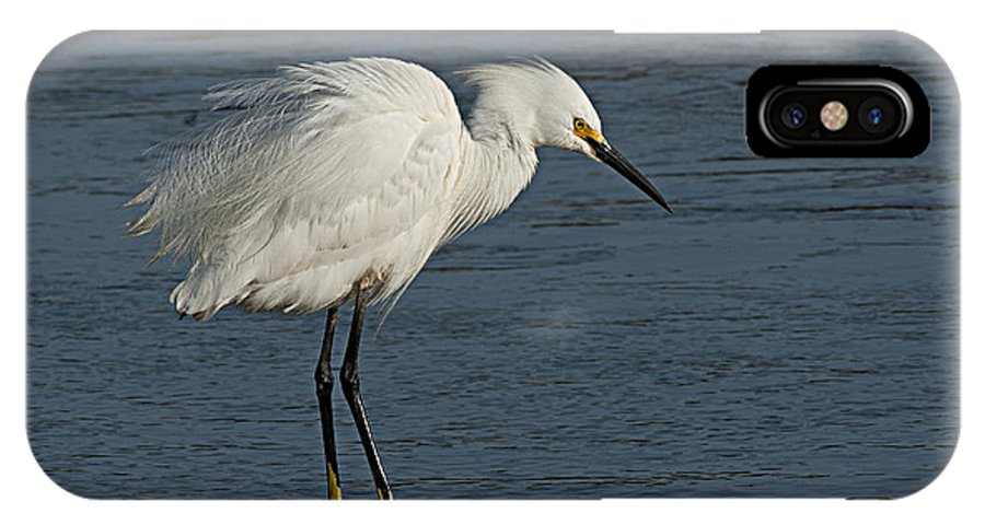 Birds IPhone X Case featuring the photograph snowey Egret by Water's Edge by Richard Brooks