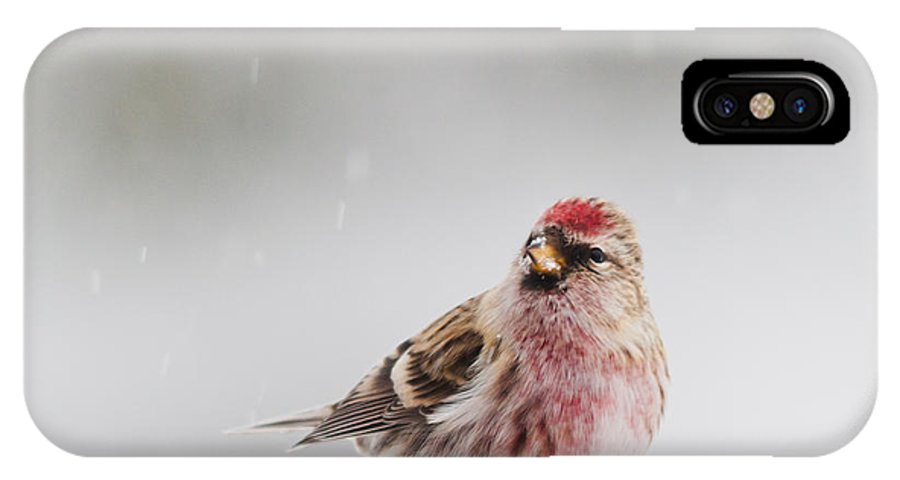 Landscapes IPhone X Case featuring the photograph Snowing by Cheryl Baxter