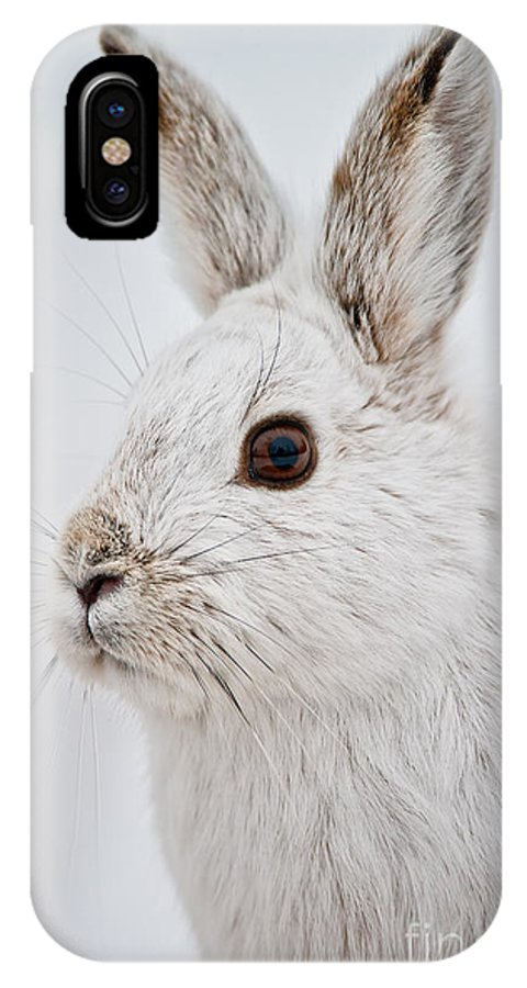 Snowshoe Hare IPhone X / XS Case featuring the photograph Snowshoe Hare Pictures 128 by World Wildlife Photography