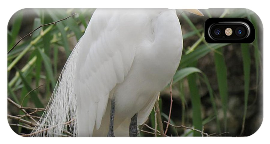 Texas IPhone X Case featuring the photograph Snowy Egret by Marilyn Burton