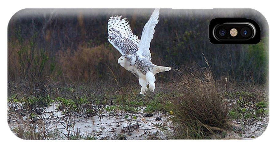 Snowy Owl IPhone X Case featuring the photograph Snowy Owl In Florida 10 by David Beebe