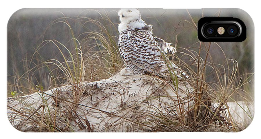 Snowy Owl IPhone X Case featuring the photograph Snowy Owl In Florida 14 by David Beebe