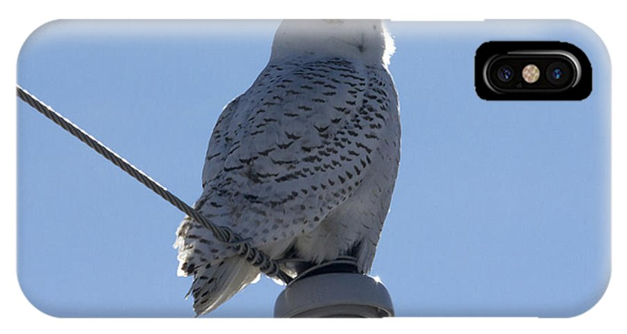 Bubo IPhone X Case featuring the photograph Snowy Owl by Jim Walker