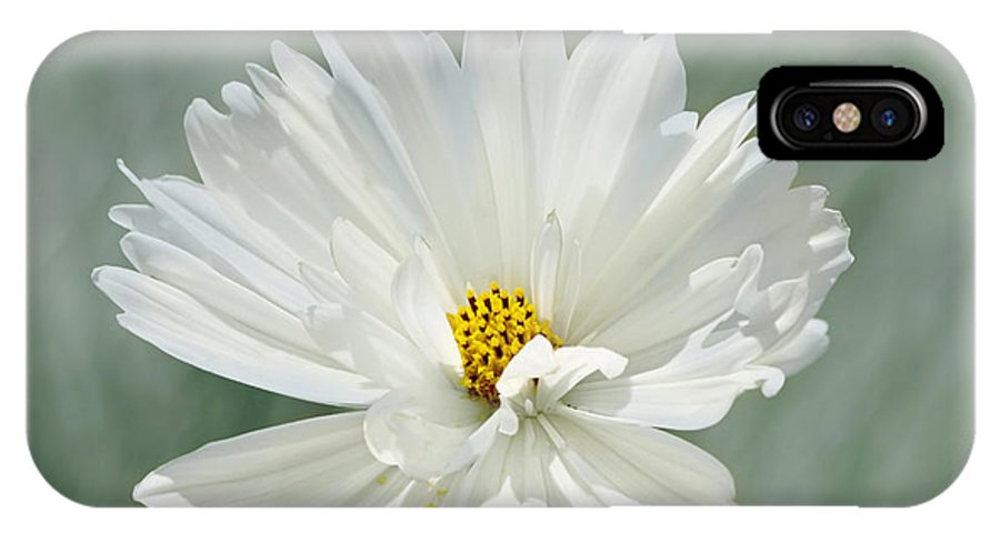 Flower IPhone X Case featuring the photograph Snowy White Cosmos by Kim Hojnacki