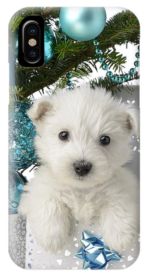 West IPhone X Case featuring the photograph Snowy White Puppy Present by MGL Meiklejohn Graphics Licensing