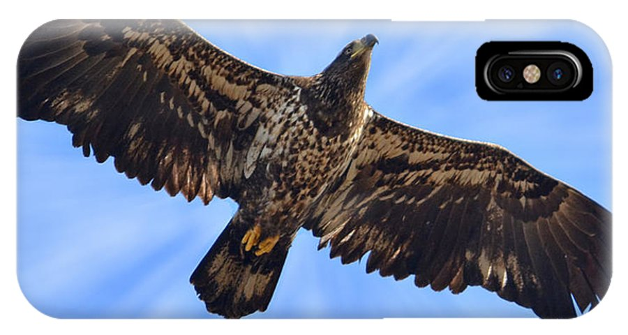 Nature Bald Eagle Bird Feather Juvenile Raptor Predator Sky Clouds Blue White Brown IPhone X Case featuring the photograph Soaring by Karl Barth