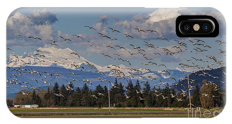 Snow Geese IPhone X Case featuring the photograph Soaring Skagit Snow Geese by Mike Reid