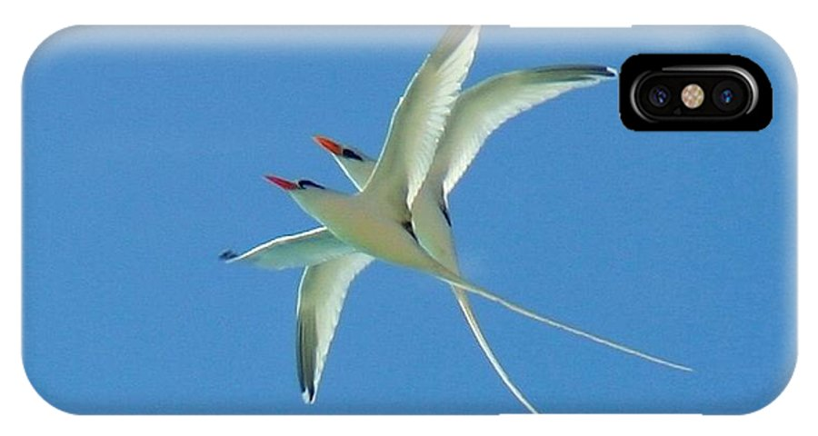 Birds IPhone X / XS Case featuring the photograph Soaring by Susan Gibbons