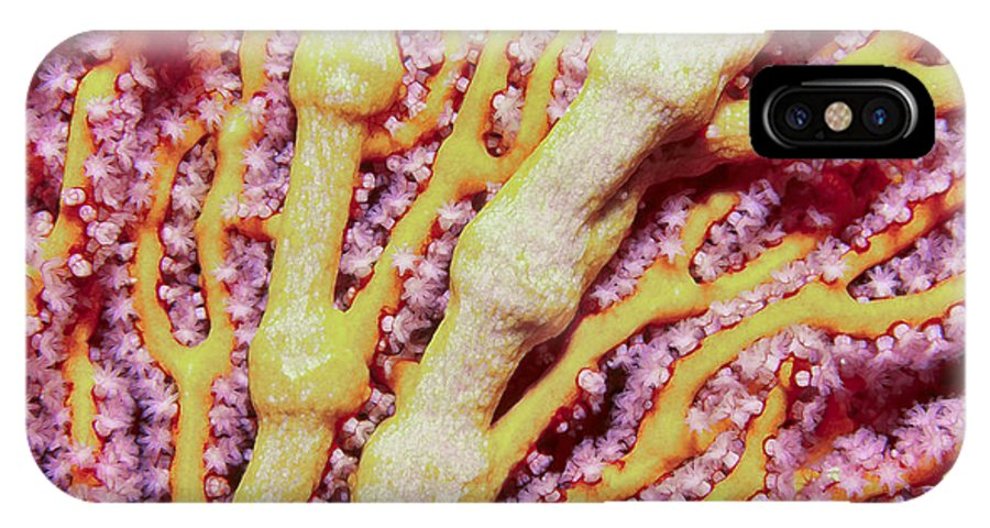 Micronesia IPhone X Case featuring the photograph Soft Corals 1 by Dawn Eshelman
