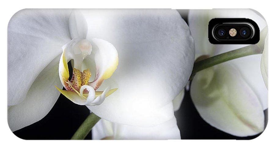 White Orchids On A Black Background IPhone X Case featuring the photograph Soft Orchid by Mauro Celotti