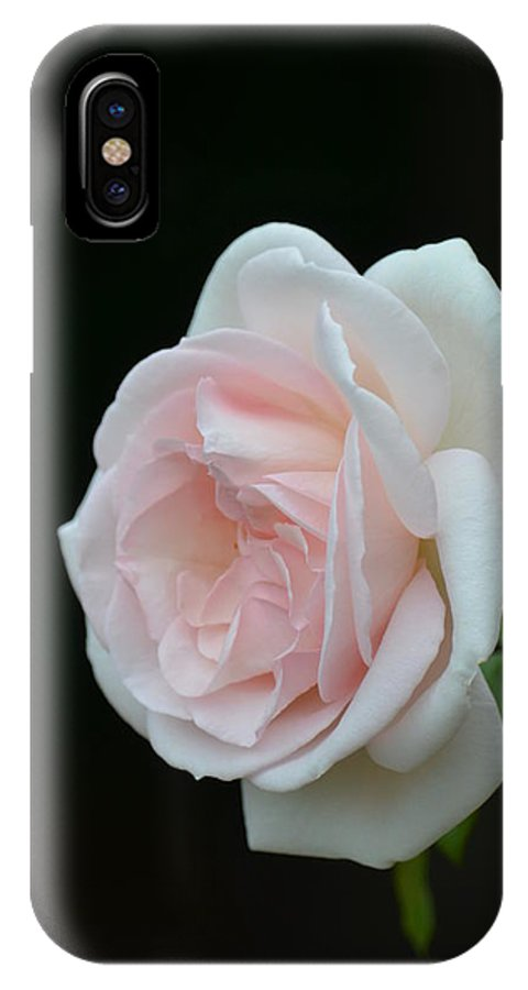 Softly Pink - Rose IPhone X Case featuring the photograph Softly Pink - Rose by Maria Urso