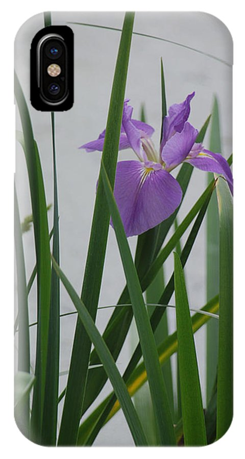 Iris IPhone Case featuring the photograph Solo Iris by Suzanne Gaff