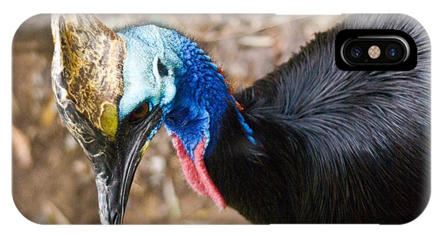 Cassorary IPhone Case featuring the photograph Southern Cassowary Portrait by Douglas Barnett