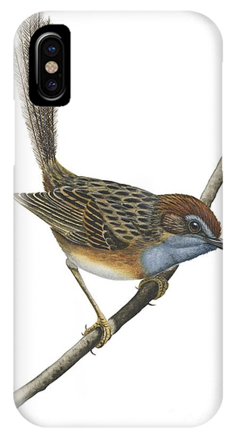 No People; Vertical; Full Length; White Background; One Animal; Animal Themes; Illustration And Painting; Southern Emu-wren; Branch; Perching; Bird; Stipiturus Malachurus IPhone X Case featuring the drawing Southern Emu Wren by Anonymous