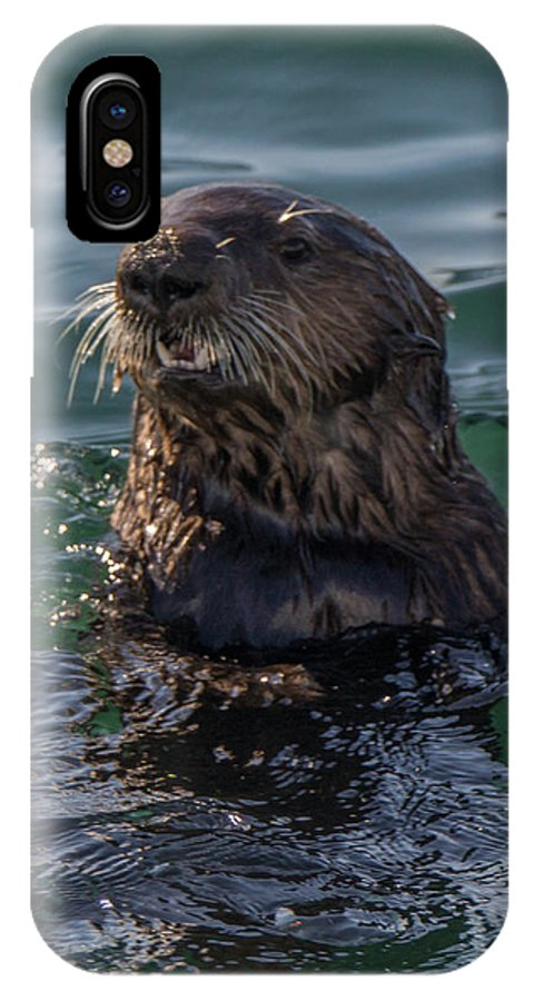 A Southern Sea Otter IPhone X Case featuring the photograph Southern Sea Otter 2 by Randy Straka