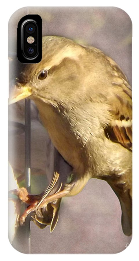 Bird IPhone X Case featuring the photograph Sparrow by Linsey Williams