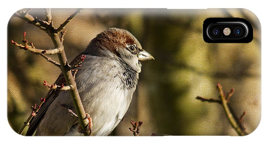 Sparrow IPhone X Case featuring the photograph Sparrow by Rebecca Cozart