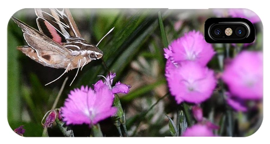 White-lined Sphinx Moth IPhone X Case featuring the photograph Sphinx Moth by Sarah Crawford