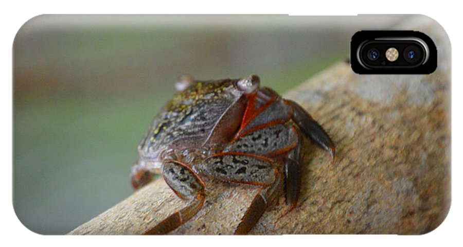 Chicago Bears IPhone X / XS Case featuring the photograph Spider Crab by Jimi Bush
