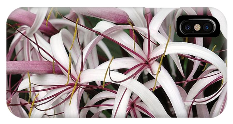 Lily IPhone X Case featuring the photograph Spider Lily by Mary Deal