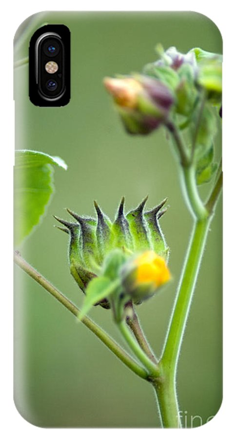 Green Flowers IPhone X Case featuring the photograph Spiky Green Wild Flowers by Optical Playground By MP Ray