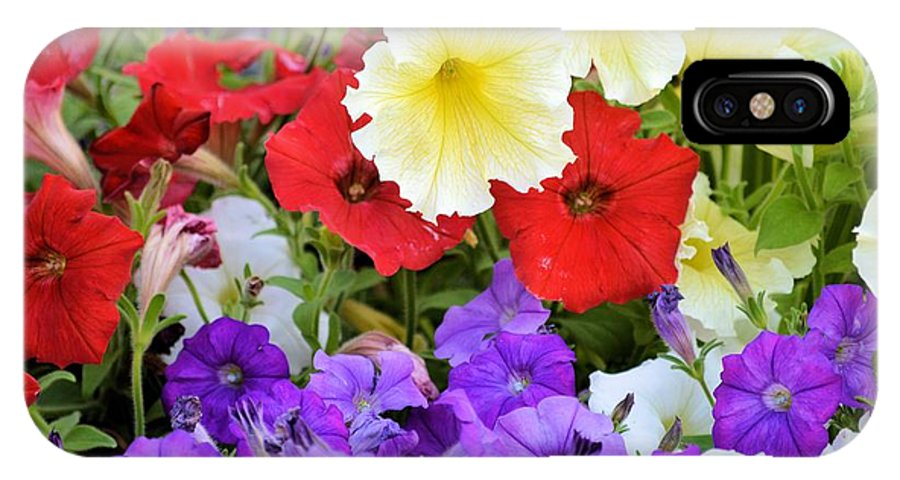 Petunia IPhone X Case featuring the photograph Splash Of Color by Bonfire Photography