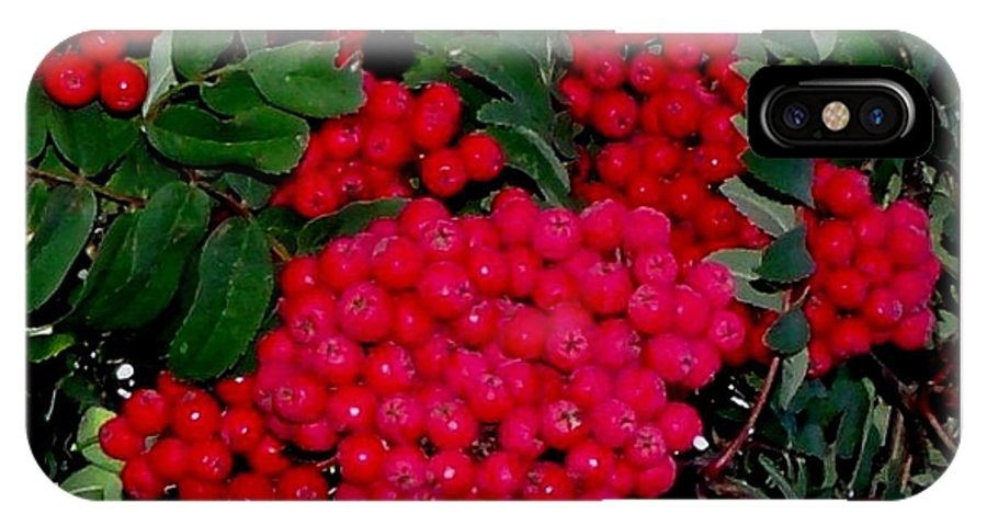 Berry IPhone X Case featuring the photograph Splash Of Red Berries by Gail Matthews