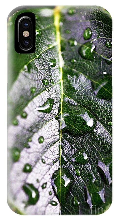 Split Leaf IPhone X Case featuring the photograph Split Leaf by John Rizzuto