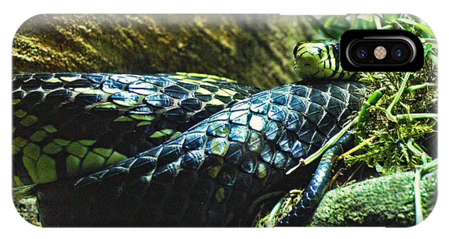Snake IPhone X Case featuring the photograph Spotted Coiled Snake by Dawn Harris