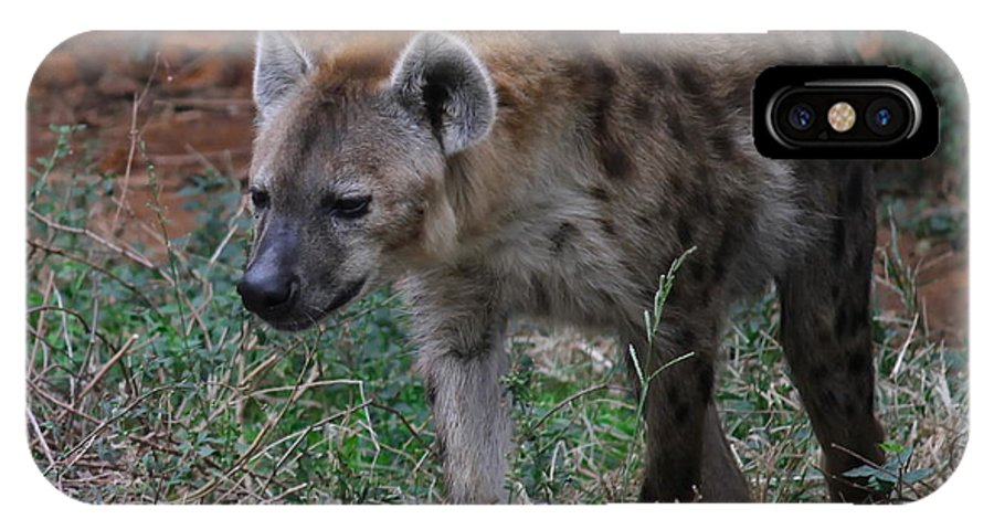 Hyena IPhone X Case featuring the photograph Spotted Hyena by Cathy Lindsey