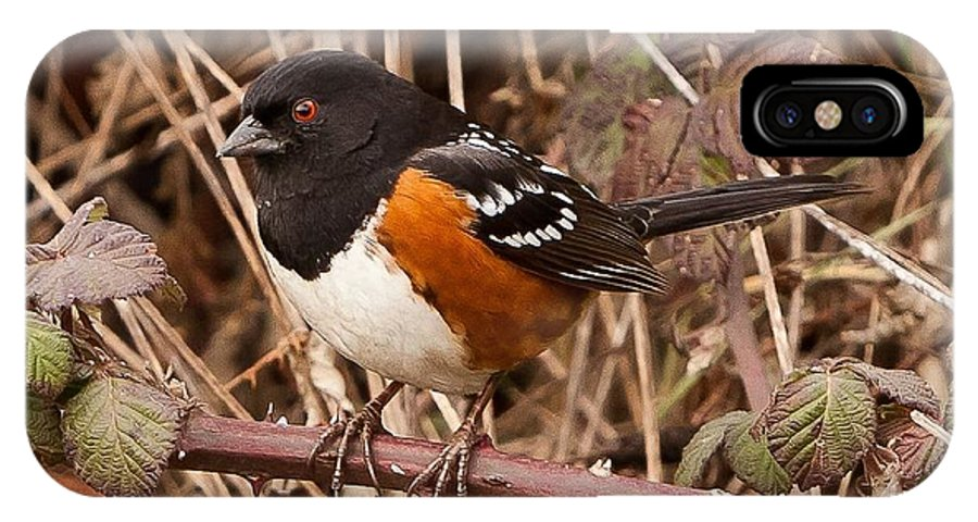 Animal IPhone X Case featuring the photograph Spotted Towhee by James Adams