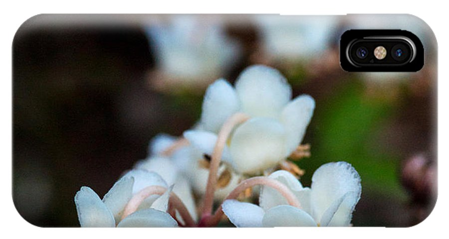 Woodland IPhone X Case featuring the photograph Spotted Wintergreen 4 by Douglas Barnett