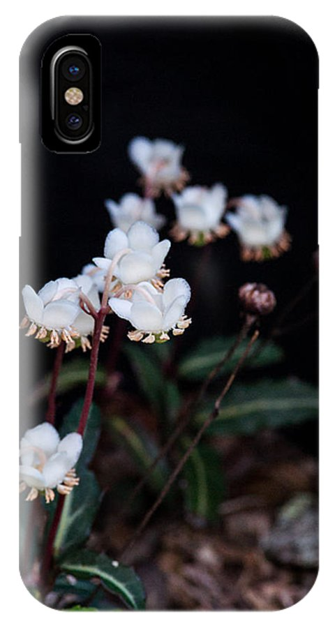Woodland IPhone X Case featuring the photograph Spotted Wintergreen 5 by Douglas Barnett